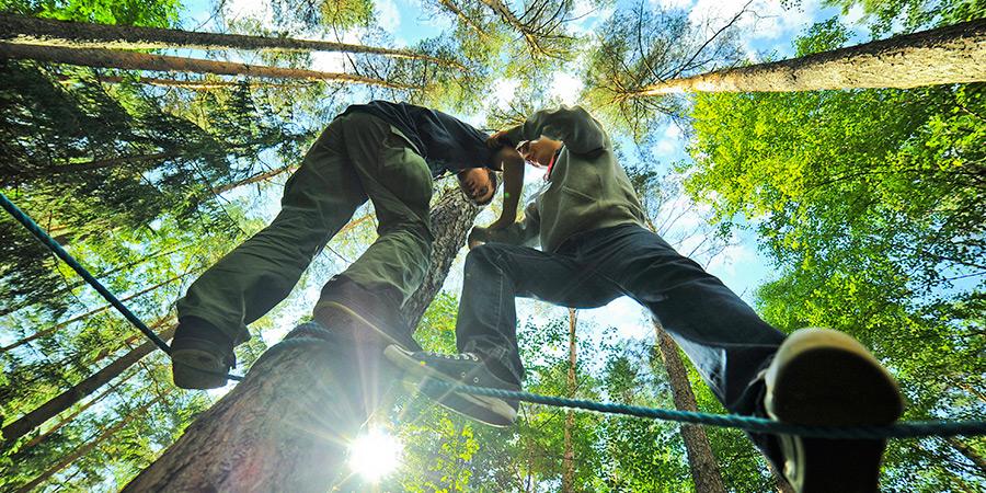 Bilet wstępu do lasu